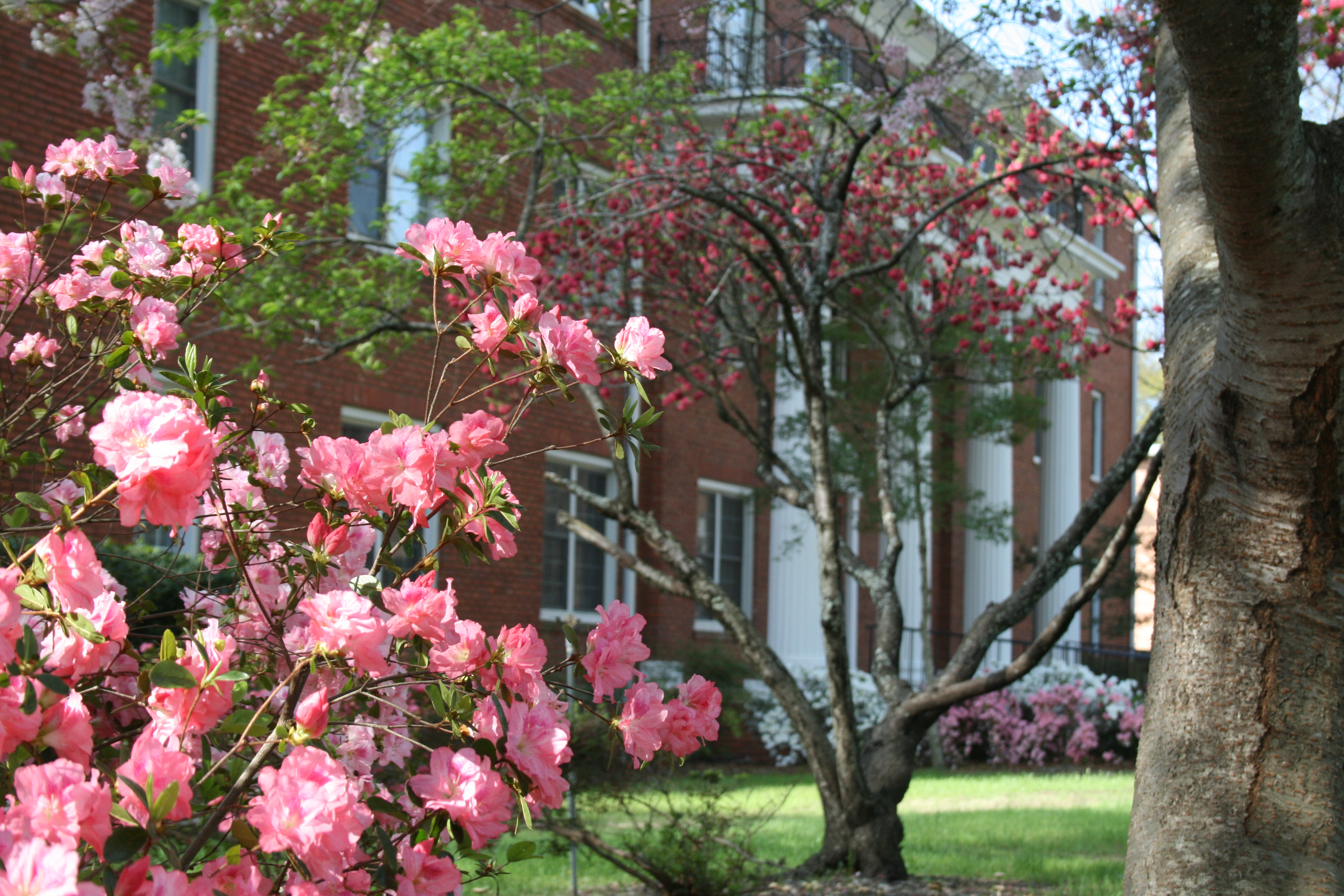 Picture of spring flowers with front portico of Holland Hall in the background